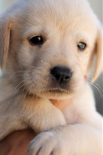 Cute puppy, dog, pet, face, hand
