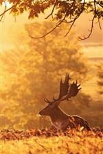 Preview iPhone wallpaper Deer, morning, trees, sun rays
