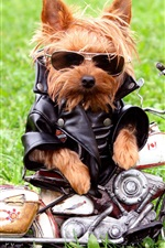 Preview iPhone wallpaper Dog motorcycle riders