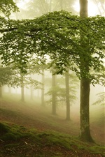 Preview iPhone wallpaper Fog, forest, trees