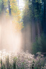 Preview iPhone wallpaper Forest, autumn, fog, grass, trees, rays