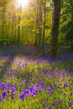 Preview iPhone wallpaper Forest, purple flowers, sunlight, trees