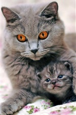 Preview iPhone wallpaper Gray cat mother with kitten