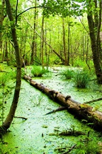 Preview iPhone wallpaper Green forest, marsh