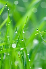 Preview iPhone wallpaper Green grass after rain