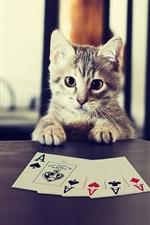 Preview iPhone wallpaper Kitten playing poker