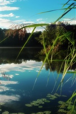 Preview iPhone wallpaper Lake, reeds, water reflection, trees