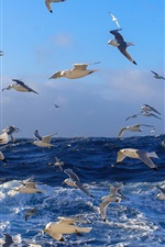 Preview iPhone wallpaper Many birds, seagulls, blue sea, ocean, water, waves