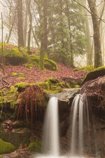 Preview iPhone wallpaper Morning forest, mist, moss, stream, waterfall