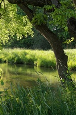 Preview iPhone wallpaper Nature forest, river, summer, green