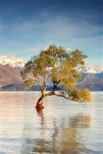 Nova Zelândia, Ilha do Sul, Lago Wanaka, montanhas, água, árvores