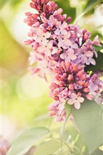 Preview iPhone wallpaper Pink flowers, lilac, spring, glare