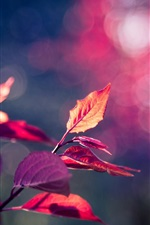 Preview iPhone wallpaper Pink purple leaves macro, bokeh