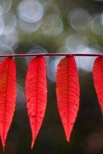 Preview iPhone wallpaper Red elongated leaves, bokeh