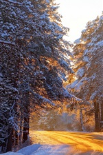 Preview iPhone wallpaper Winter forest, trees, road, sunlight, snow