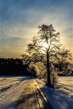 Preview iPhone wallpaper Winter landscape, road, trees, sunlight
