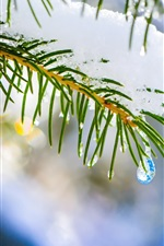 Preview iPhone wallpaper Winter nature, macro, spruce, tree, snow