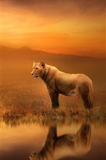 Preview iPhone wallpaper Art pictures, lioness, dusk, water reflection