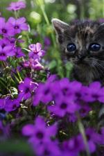 iPhone обои Милый котенок, фиолетовые цветы
