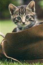 Preview iPhone wallpaper Cute kitten, shoes, green grass
