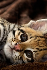 Preview iPhone wallpaper Cute ocelot, kitten, have a rest