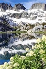 Preview iPhone wallpaper Ediza Lake, Ansel Adams Wilderness, California, USA, flowers, mountains