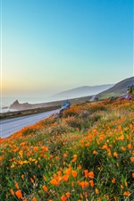 Preview iPhone wallpaper Evening, sunset, road, orange flowers, poppies, rocks, sea, mountains