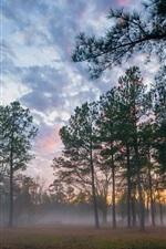 Vorschau des iPhone Hintergrundbilder Wald, Sonnenuntergang, Nebel