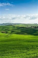 Green fields, grass, nature