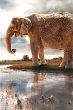 Preview iPhone wallpaper Lake, water reflection, elephant, giraffe, river