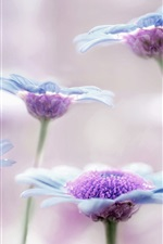 Preview iPhone wallpaper Little flowers, blue, purple