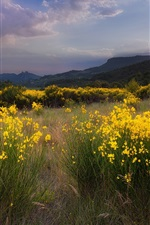 Nature landscape, meadow, yellow flowers, grass, sunset, mountains