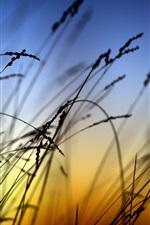 Paisagem, pôr do sol, grama