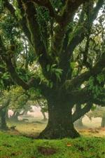미리보기 iPhone 배경 화면 자연 풍경, 나무, 숲, 공원