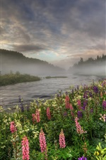 Preview iPhone wallpaper Norway, forest, river, trees, fog, flowers, summer, morning