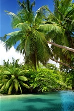 iPhone fondos de pantalla Las palmeras, tropical, mar, agua azul, verano