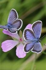 Preview iPhone wallpaper Pink flowers, blue butterfly, bokeh, grass