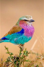 미리보기 iPhone 배경 화면 무지개 깃털의 새, 다채로운