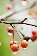 Preview iPhone wallpaper Red cherries, berries, branches, rain