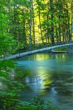 미리보기 iPhone 배경 화면 강, 숲, 다리, 여름, 자연 풍경