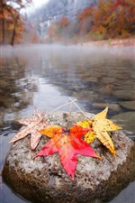 Река, камни, листья клена, осень, утро
