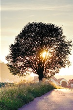 Summer landscape, road, tree, house, sunrise, light rays