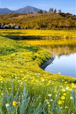 Preview iPhone wallpaper Summer nature, flowers, grass, lake, sky