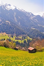 Preview iPhone wallpaper Switzerland, fields, trees, mountains, slopes, village