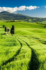 Preview iPhone wallpaper Tuscany, Italy, green fields, spring