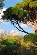 Preview iPhone wallpaper Ukraine, Crimea, trees, mountains, park, nature