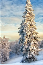 Preview iPhone wallpaper White winter, snow, trees