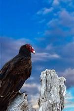 Preview iPhone wallpaper A bird, blue sky
