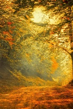 Preview iPhone wallpaper Autumn, forest, road, trees, sunlight