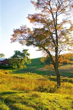 Preview iPhone wallpaper Autumn, house, grass, trees, sunlight